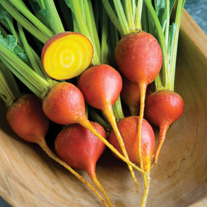 Touchstone Gold Beet Seeds