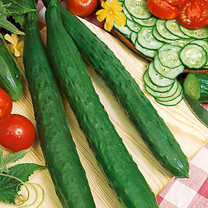 Asian- Cucumber Suhyo OG