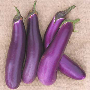 Eggplant Chinese Bride - Asian Vegetable