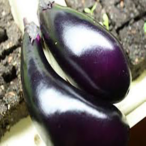 Eggplant Japanese Black Shine - Asian Vegetable
