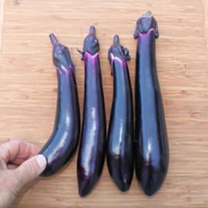 Eggplant Japanese Millionaire - Asian Vegetable Seeds