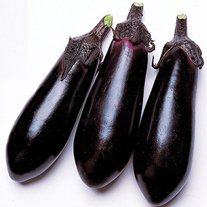 Eggplant Japanese Money Maker 2 - Asian Vegetable