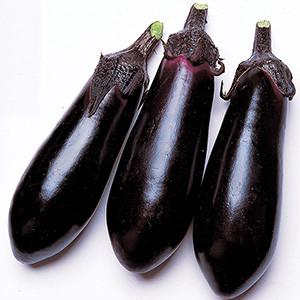 Eggplant Japanese Money Maker 2 - Asian Vegetable
