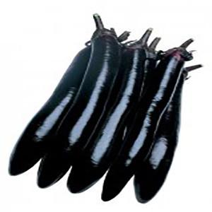 Eggplant Japanese Shoya Long - Asian Vegetable