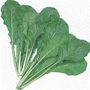Turnip Greens Leafy Nozawana- Asian Vegetable