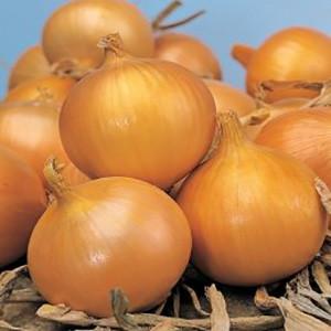 Onion Early Yellow Imai Senshu- Asian Vegetable