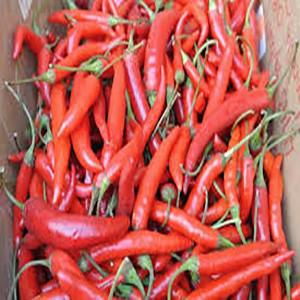 Pepper Thai Hot- Asian Vegetable