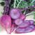 Radish Korean Bora King- Asian Vegetable