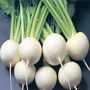 Turnip White Hakueri- Asian Vegetable