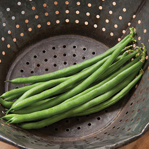 Organic Jade Bush Bean