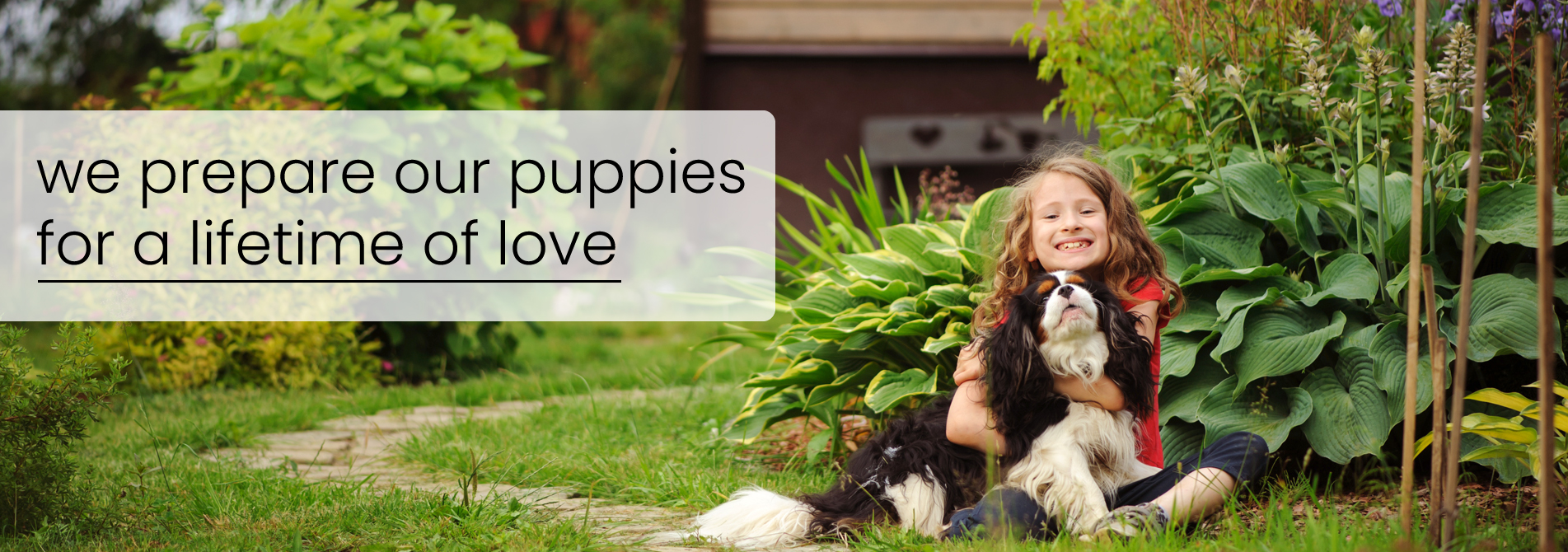 We prepare our puppies for a lifetime of love