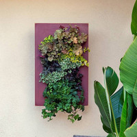 Designer-Living-Wall-Planter-Kit-from-GroVert-(see-video)