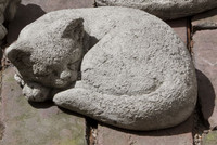Campania Stone curled cat small.
