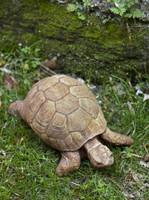 Campania Stone turtle.