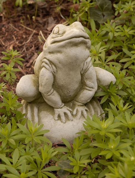 Campania Stone frankie frog.