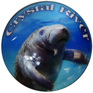 "Round ""Crystal River"" Glass Manatee Magnet"