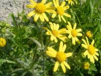 arnmonflowers2.jpg