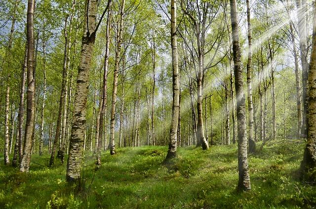 forest-2165356-640.jpg