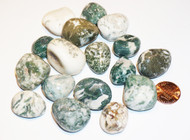 Tree Agate Tumbled Gemstones 1-LB