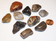 Petrified Wood Tumbled Gemstones 1-LB