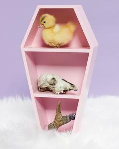 Hanging Pink Coffin Shelf