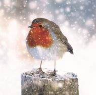 2020 Christmas Card - Robin on a snowy post