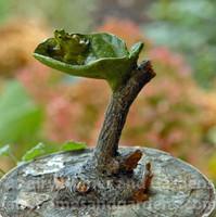 Miniature Leaf Birdbath with Tiny Frog