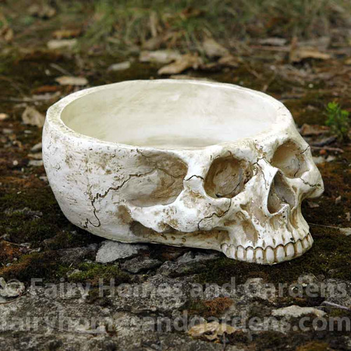 Skull Miniature Garden Container
