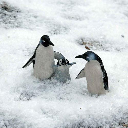 Miniature Penguin Family