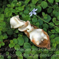 Miniature Bunnies Sledding