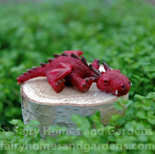 Miniature Red Dragon Snoozing