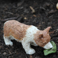 Miniature Corgi Dog - Lewis