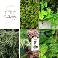 5 Terrarium Plant Package