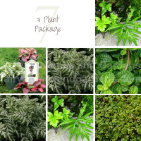 7 Terrarium Plant Package