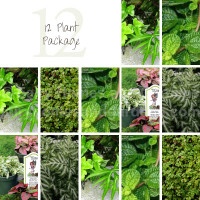12 Terrarium Plant Package