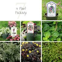 7 Indoor Plant Package