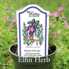 Cuphea hyssopifolia -  Tiny Elfin Herb