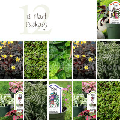 12 Indoor House Plant Package