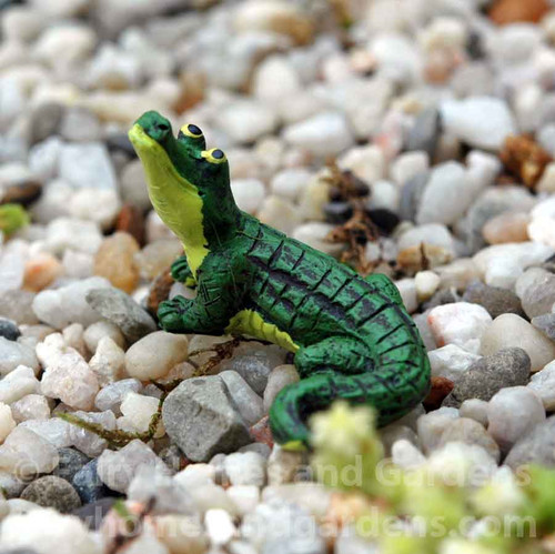 Miniature Alligator