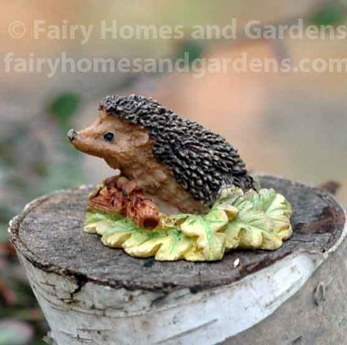 Miniature Hedgehog on Leaves