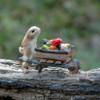 Miniature Rabbit Pushing Wheelbarrow Collectible