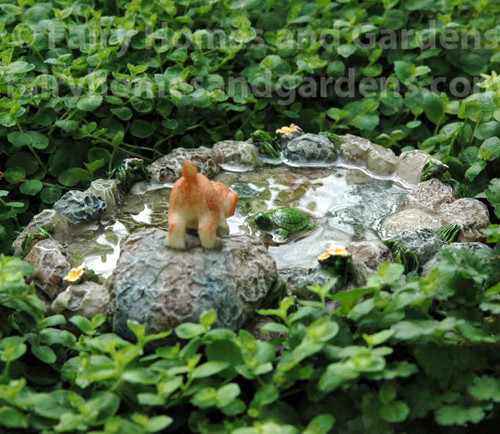 Miniature Puppy at the Pond