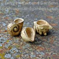 Miniature Seashells - Set of Three