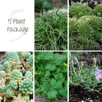 assortment of miniature fairy garden plants and flowers
