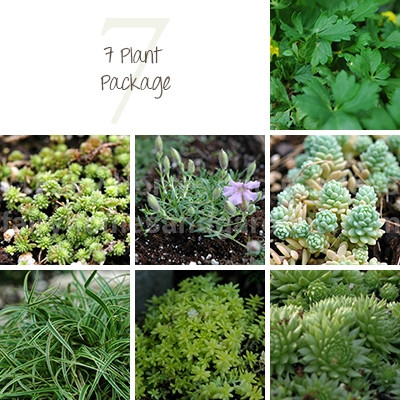 7 Miniature Plant Package