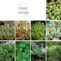 9 Miniature Plant Package