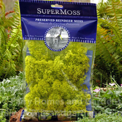 Preserved Reindeer Moss - Chartreuse