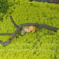 Sprite Napping in a Tree Branch