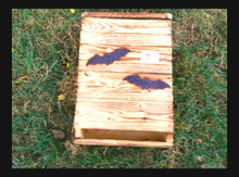 "Two chamber bat house with extra thick wood, an additional ""birthing chamber"", and a predator guard--holds about 50 small brown bats"