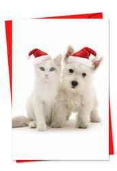 6596IXS - Copy Cats: Paper Card